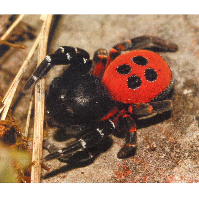 энциклопедия о лесных пауках дальнего востока летнего времени подойдет