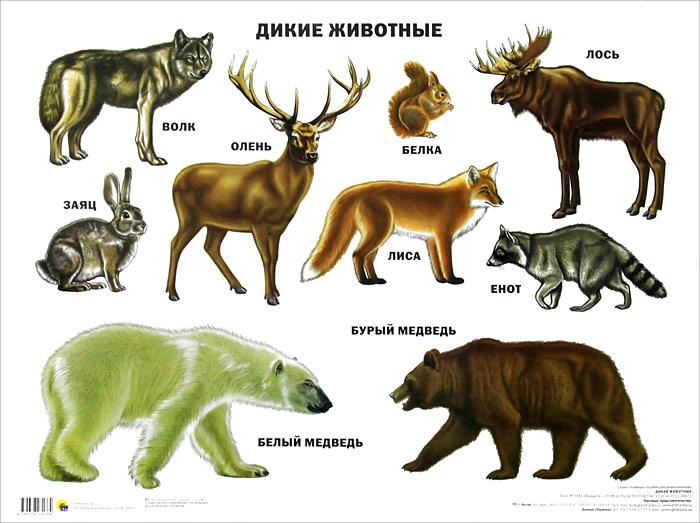 картинки дикие животные для малышей следующем