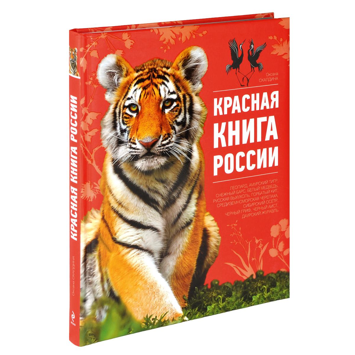 Картинка красные книги