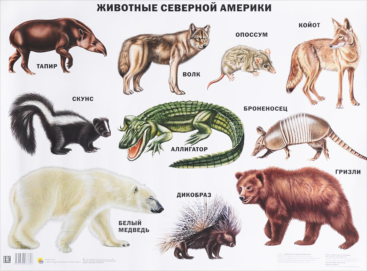 фотографий животные северной америки фото с названиями интересно было