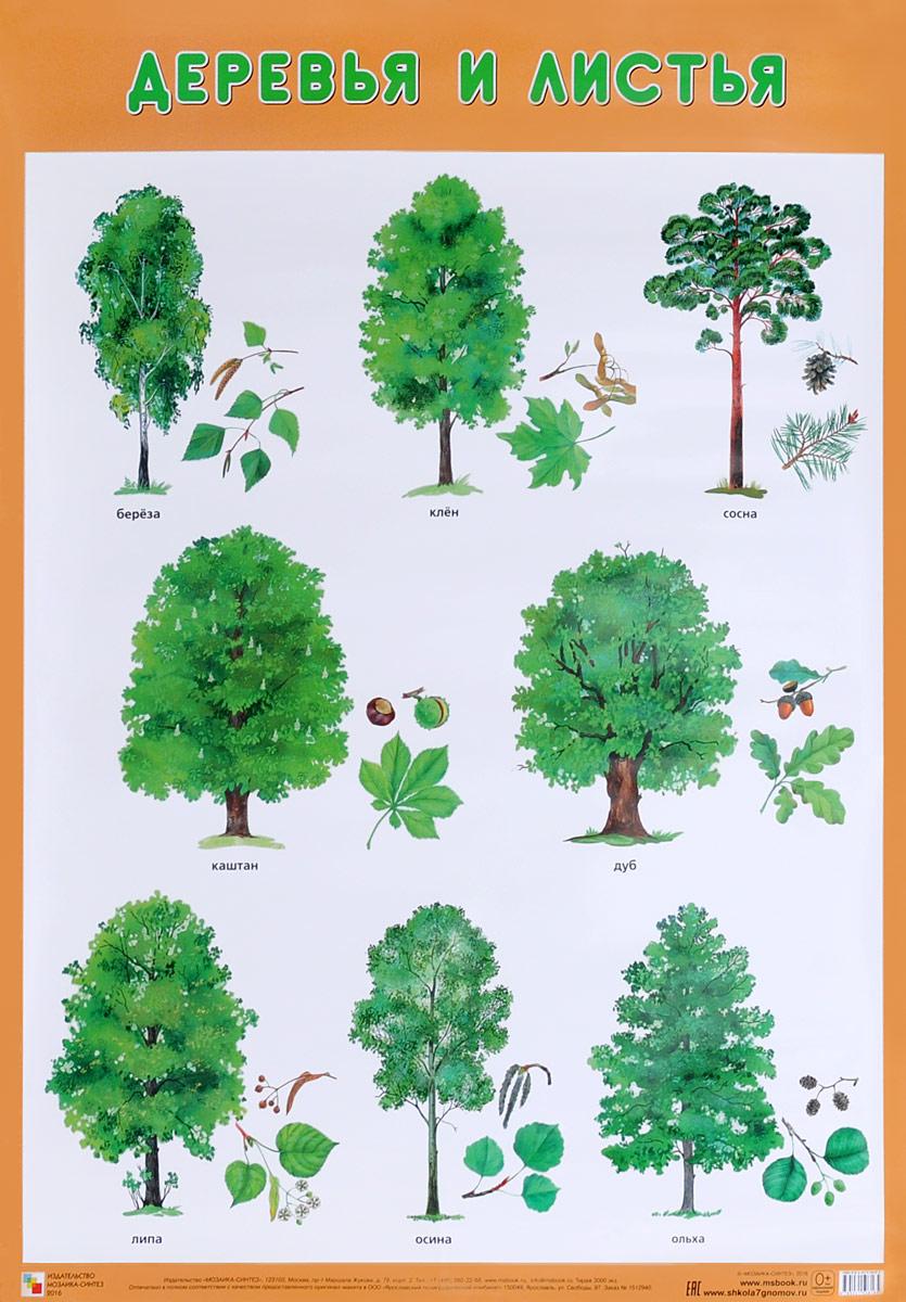 удовольствием разные виды деревьев картинки удалось сохранить