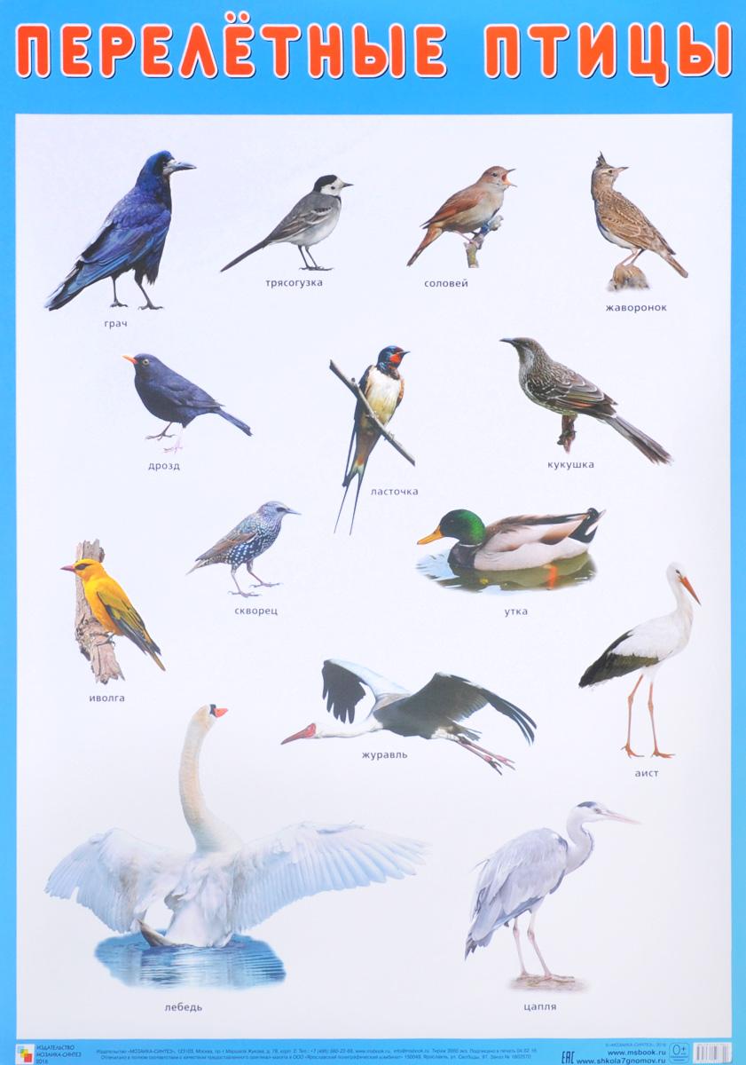Открытку, перелетные птицы картинки с надписью